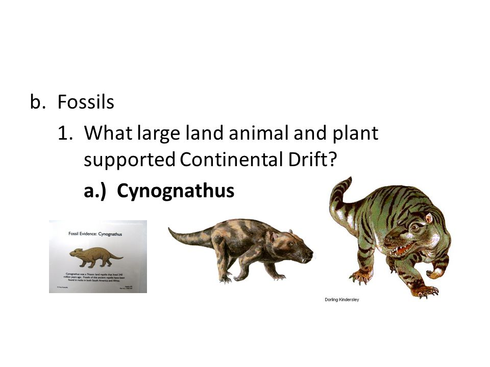 Fossils 1. What large land animal and plant supported Continental Drift a.) Cynognathus