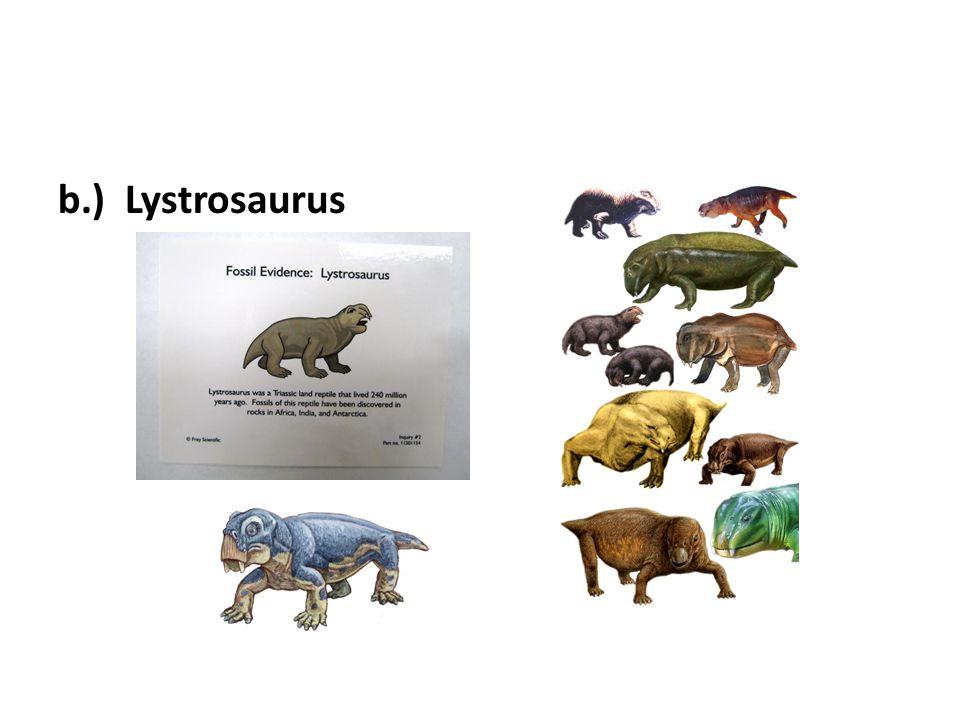 b.) Lystrosaurus