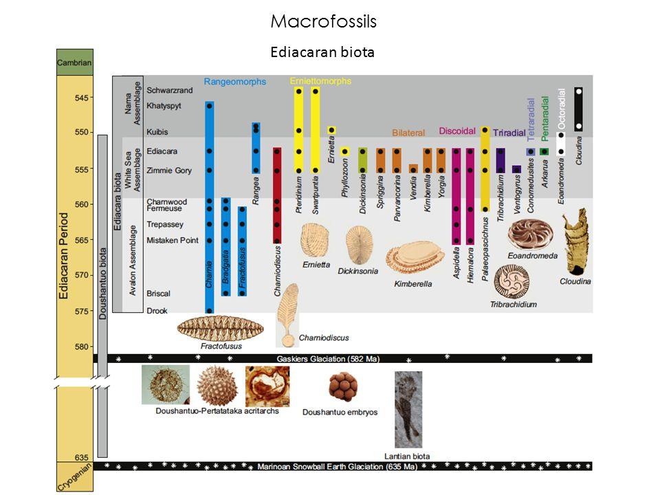 Macrofossils Ediacaran biota