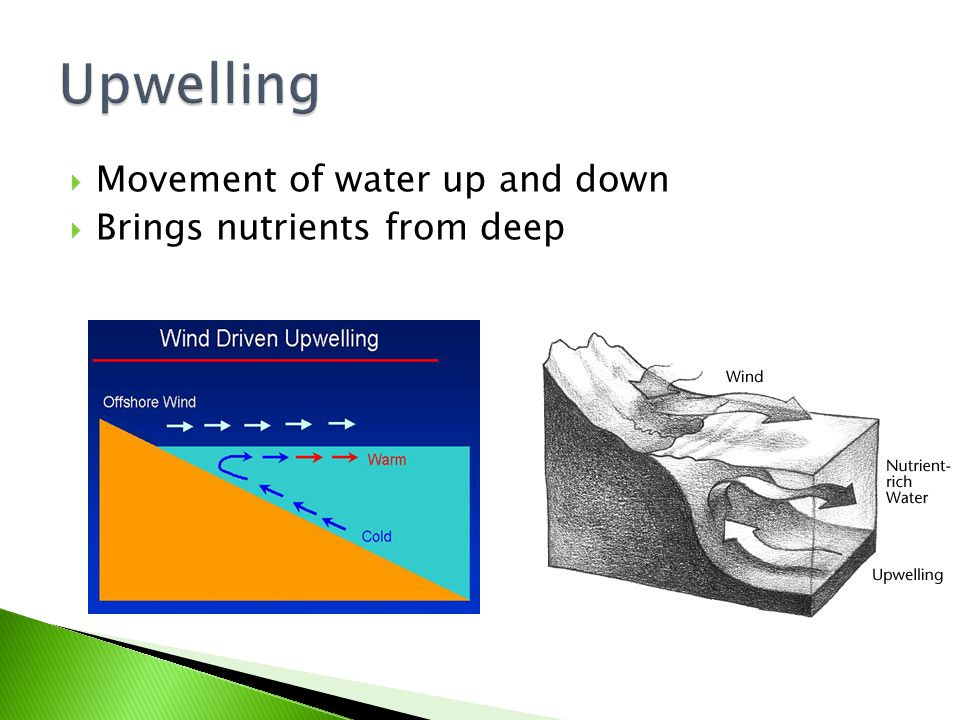 Upwelling Movement of water up and down Brings nutrients from deep