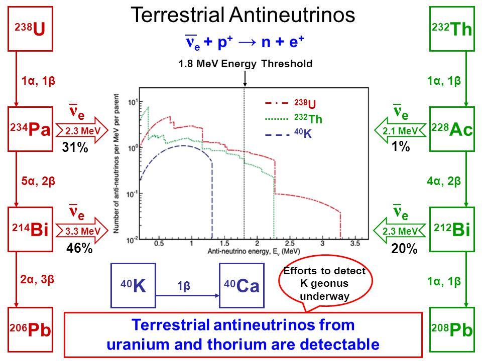 Terrestrial antineutrinos from uranium and thorium are detectable