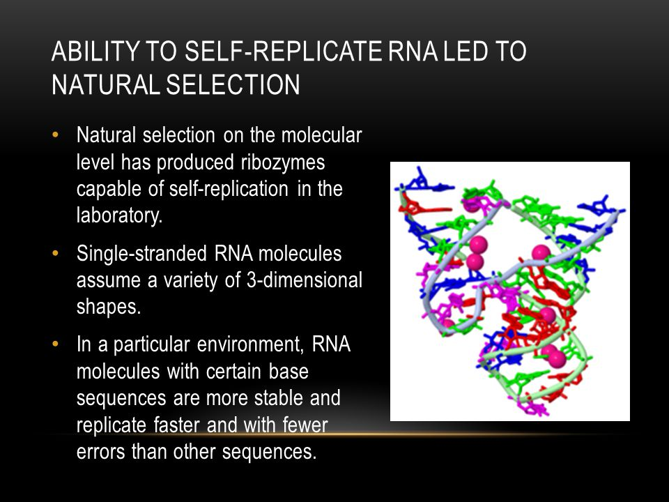 Ability to self-replicate rna led to natural selection