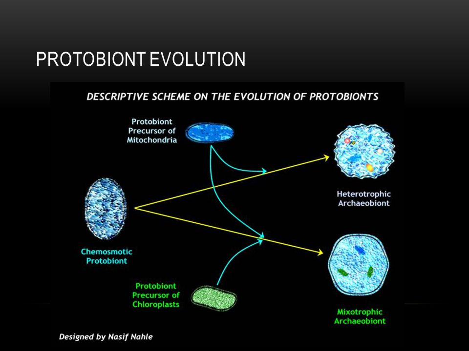 Protobiont evolution