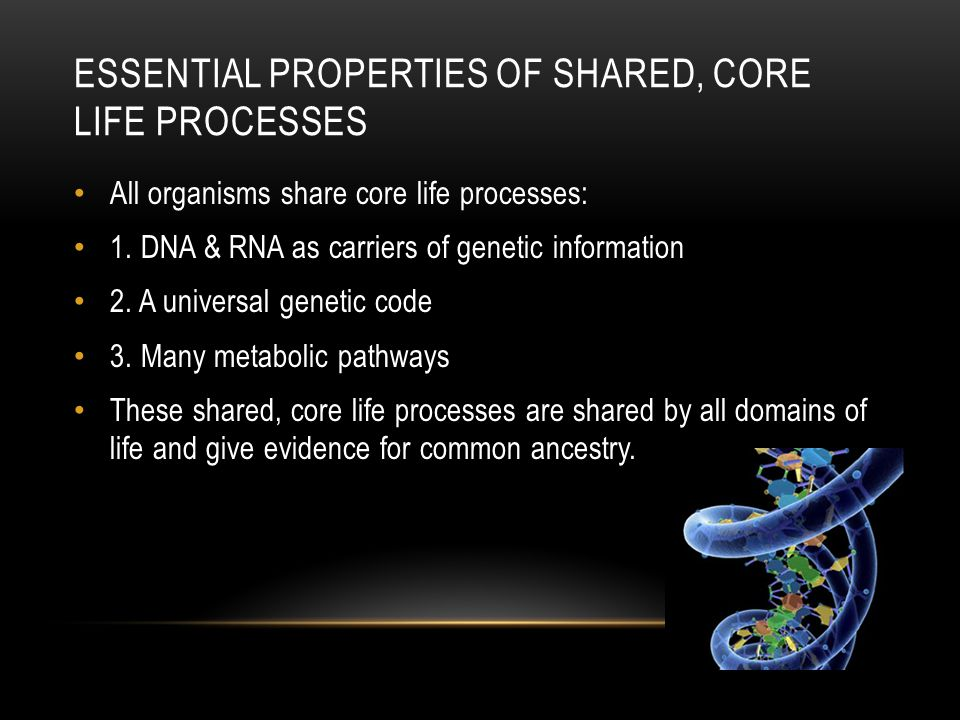 Essential properties of shared, core life processes
