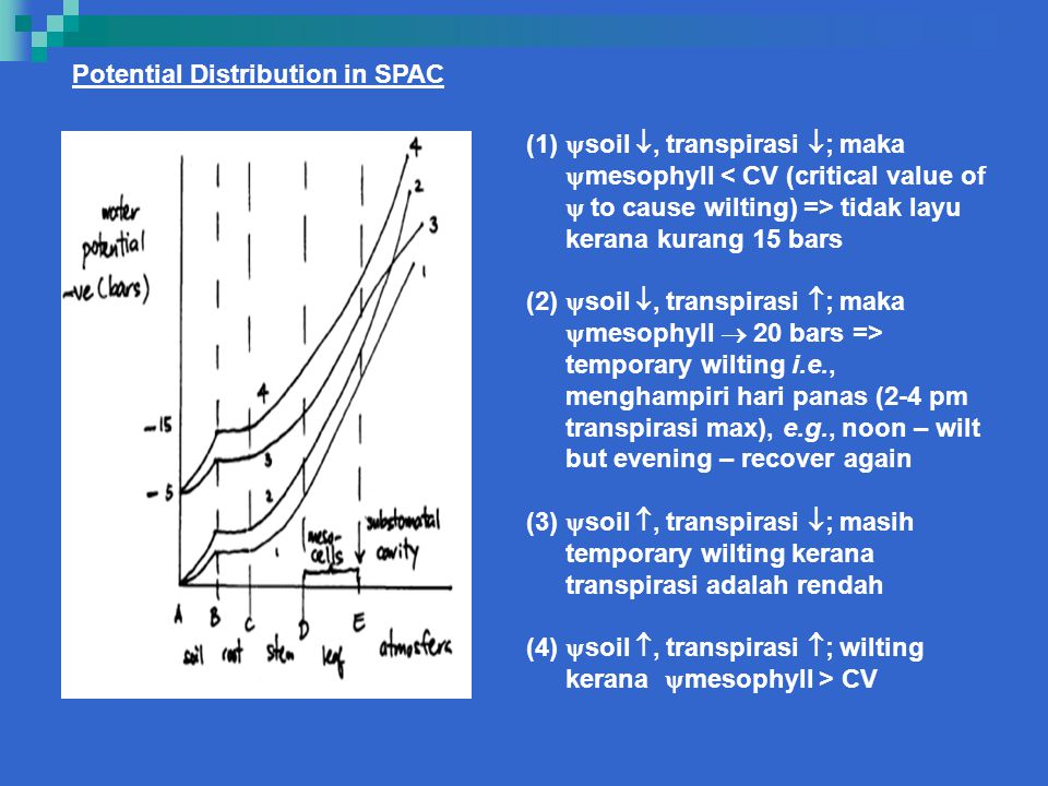 Potential Distribution in SPAC