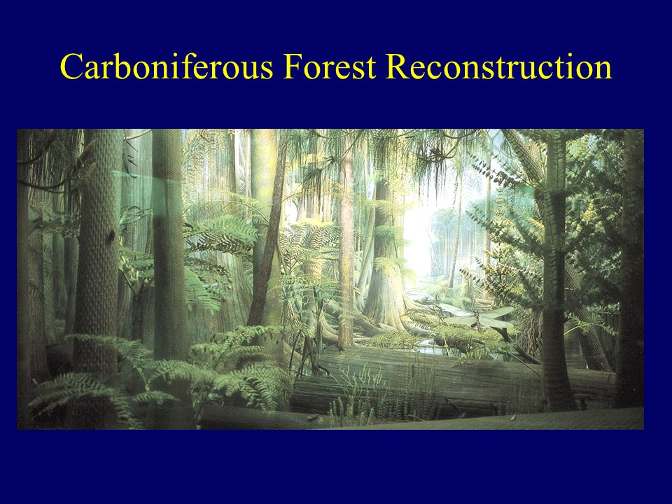 Carboniferous Forest Reconstruction
