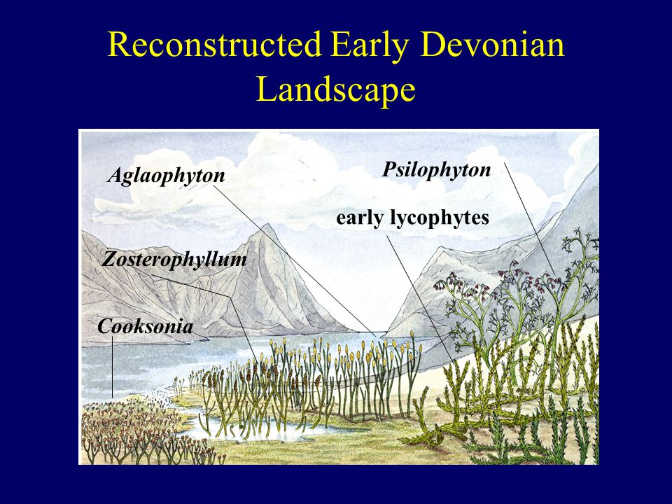 Reconstructed Early Devonian Landscape