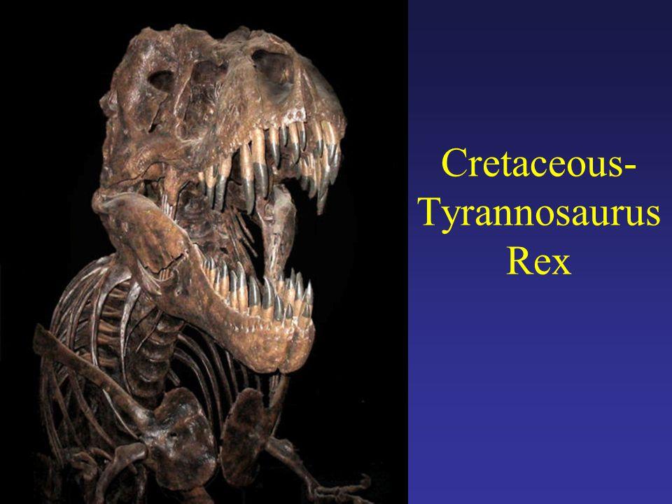 Cretaceous-Tyrannosaurus Rex