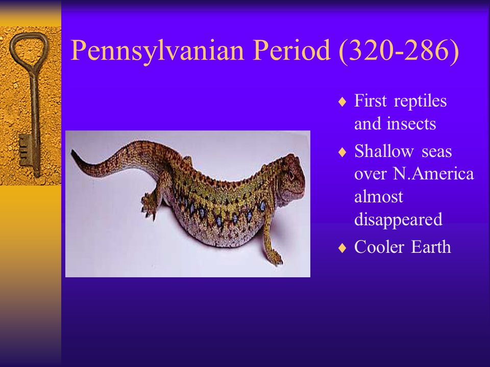 Pennsylvanian Period (320-286)
