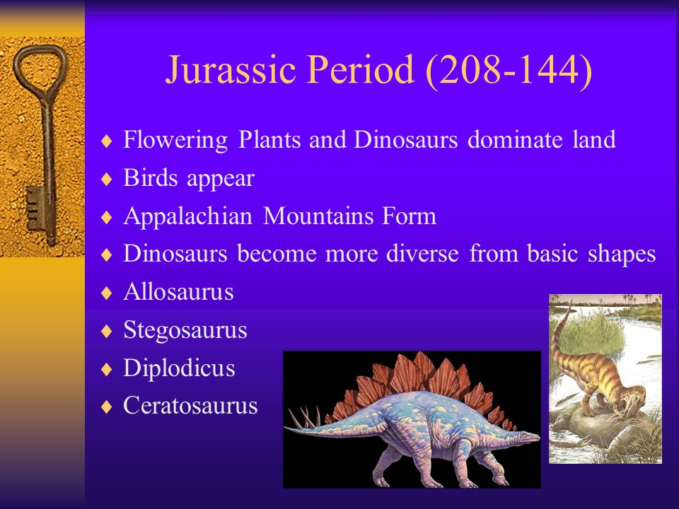 Jurassic Period (208-144) Flowering Plants and Dinosaurs dominate land