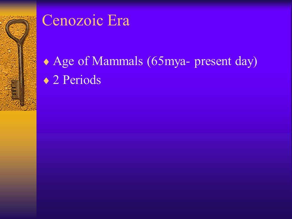 Cenozoic Era Age of Mammals (65mya- present day) 2 Periods