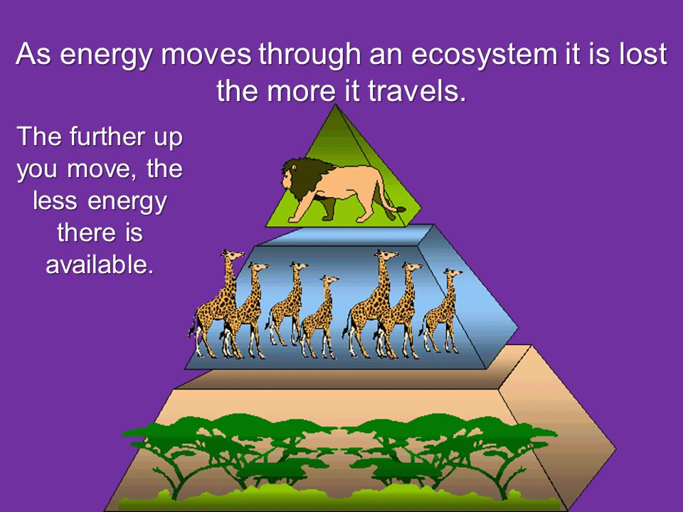 As energy moves through an ecosystem it is lost the more it travels.