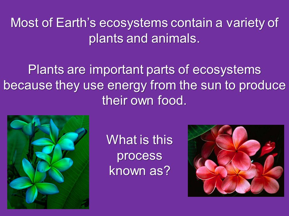 Most of Earth's ecosystems contain a variety of plants and animals.