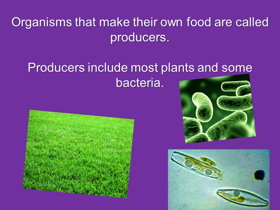 Organisms that make their own food are called producers.