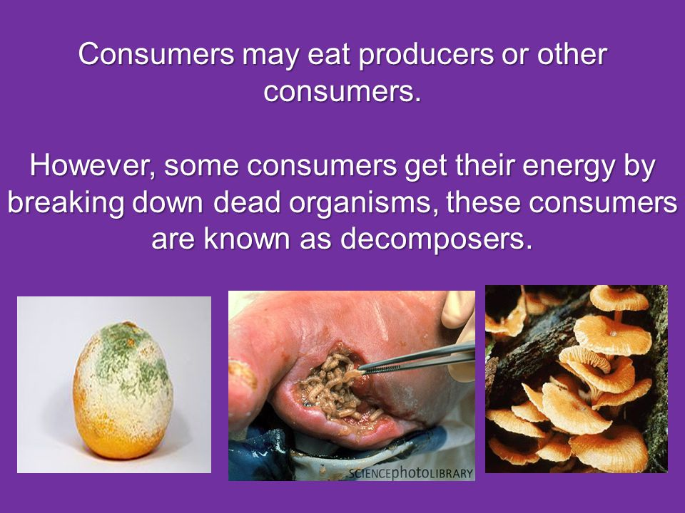 Consumers may eat producers or other consumers.