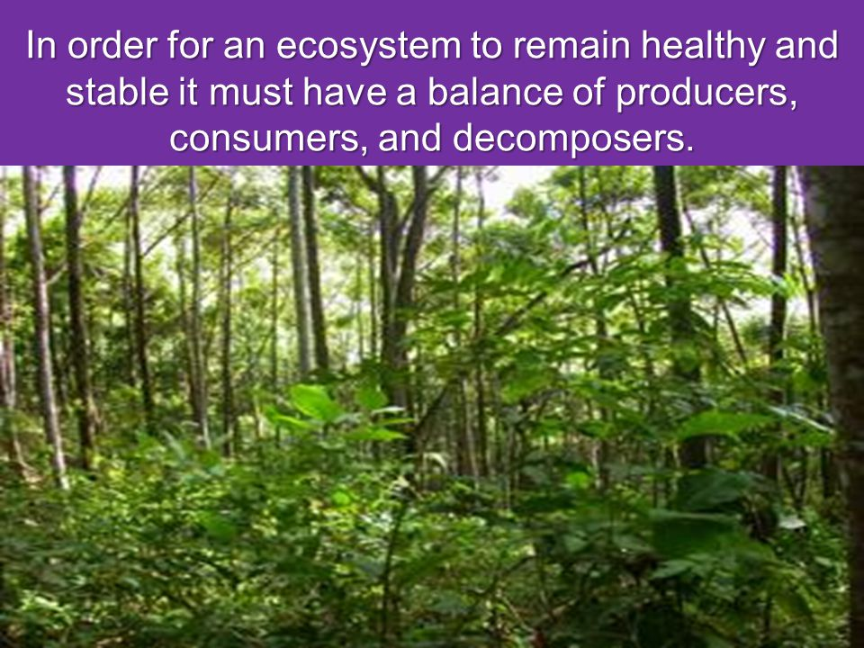 In order for an ecosystem to remain healthy and stable it must have a balance of producers, consumers, and decomposers.