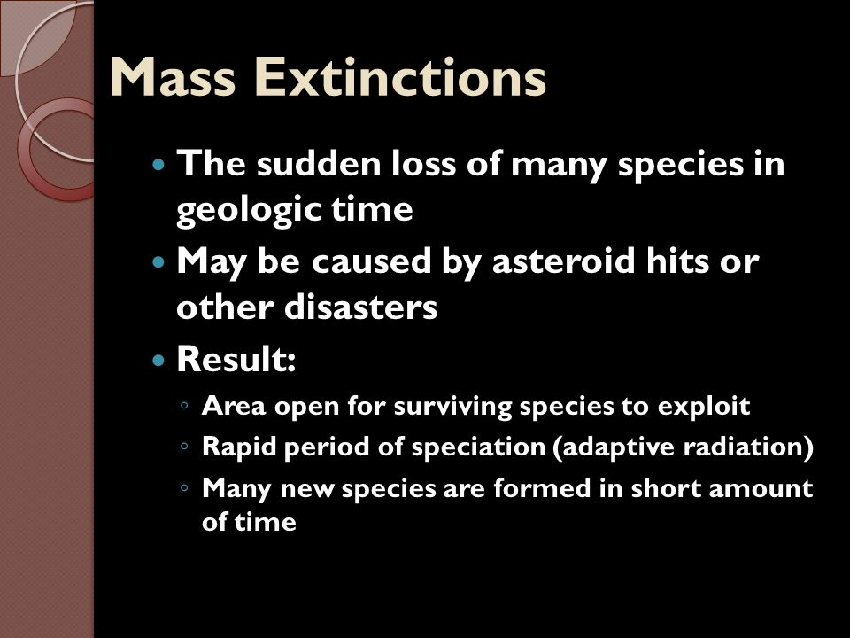 Mass Extinctions The sudden loss of many species in geologic time