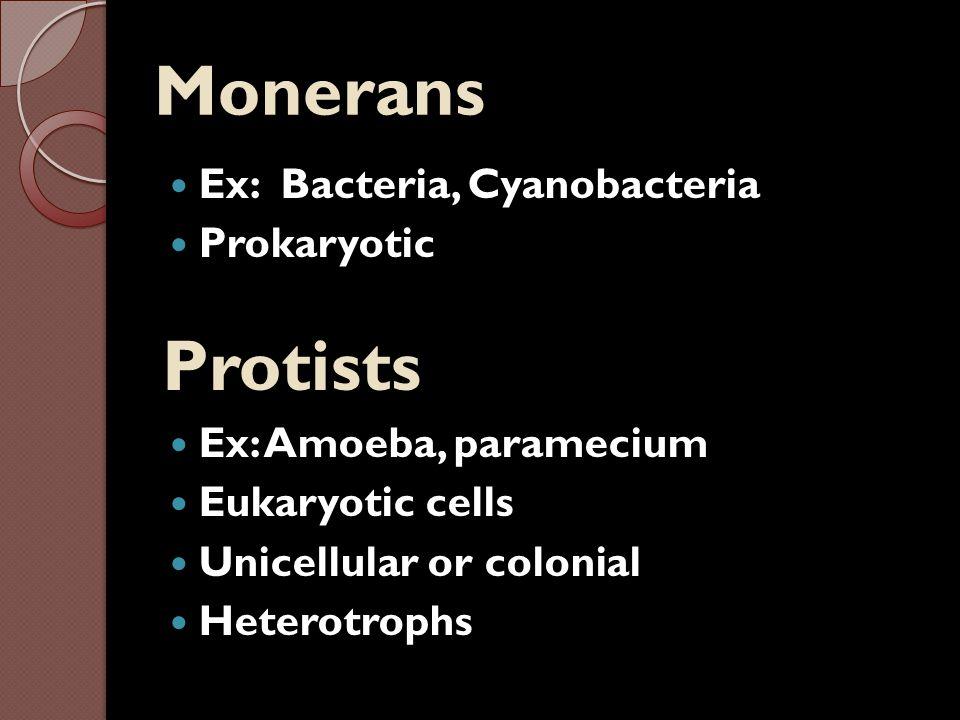 Monerans Protists Ex: Bacteria, Cyanobacteria Prokaryotic