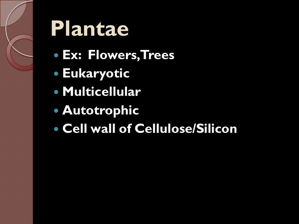Plantae Ex: Flowers, Trees Eukaryotic Multicellular Autotrophic