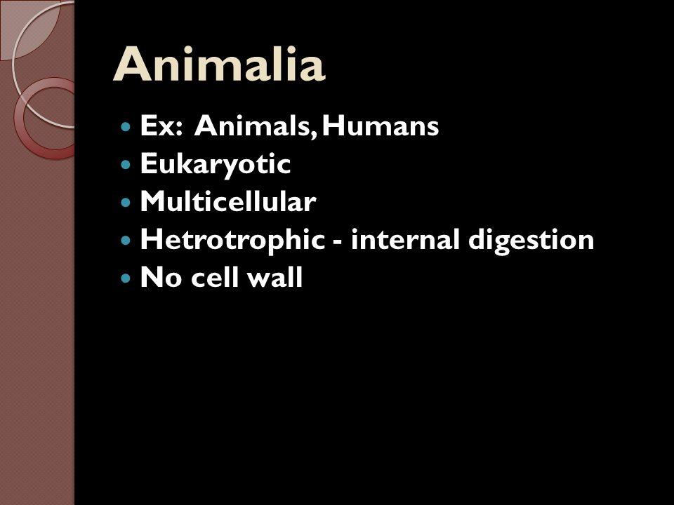 Animalia Ex: Animals, Humans Eukaryotic Multicellular