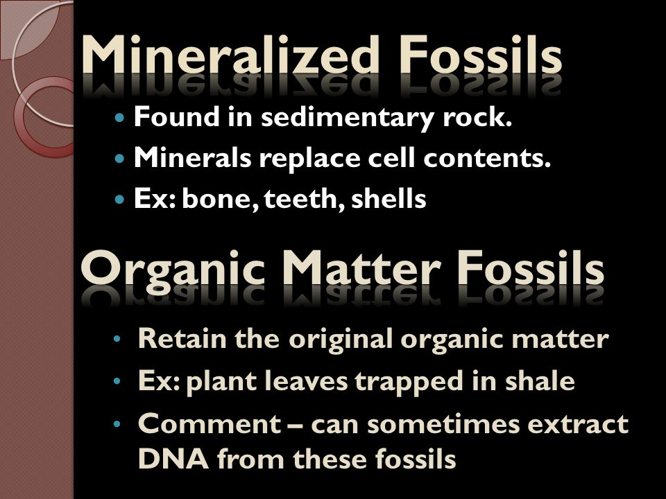 Mineralized Fossils Organic Matter Fossils Found in sedimentary rock.