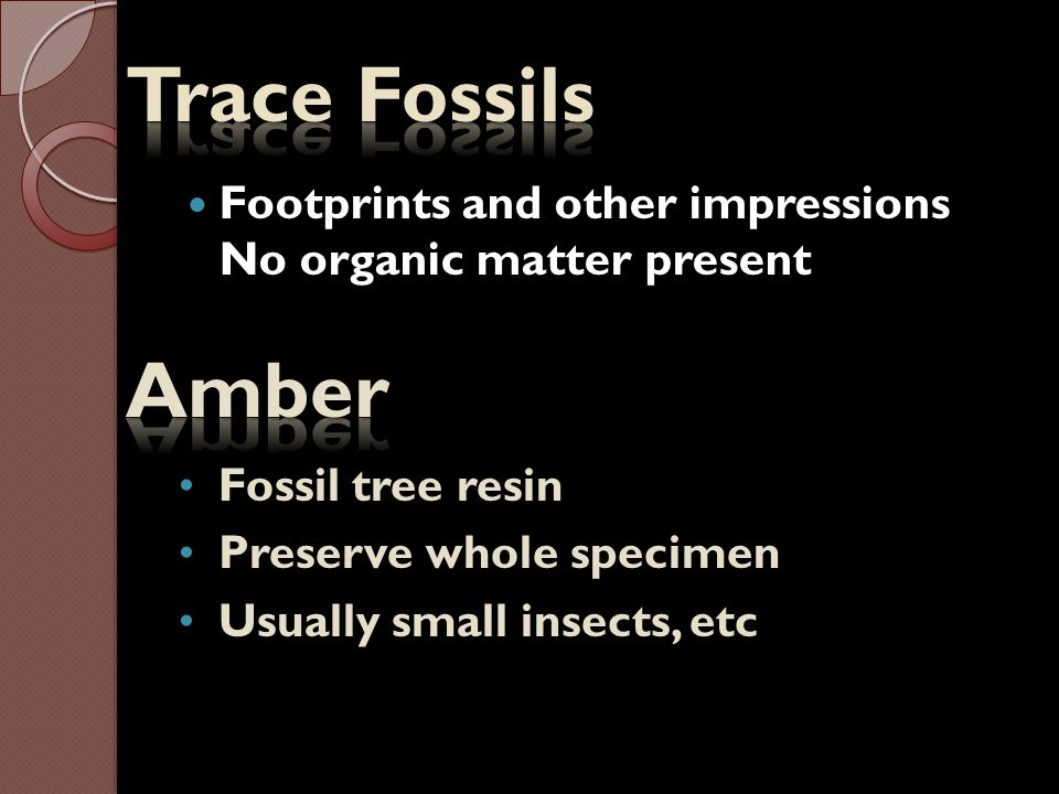 Trace Fossils Footprints and other impressions No organic matter present. Amber. Fossil tree resin.