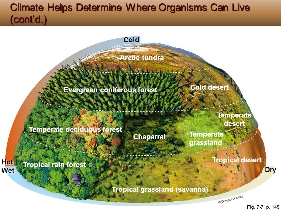 Climate Helps Determine Where Organisms Can Live (cont'd.)
