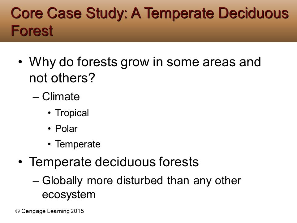 Core Case Study: A Temperate Deciduous Forest