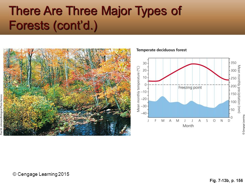 There Are Three Major Types of Forests (cont'd.)