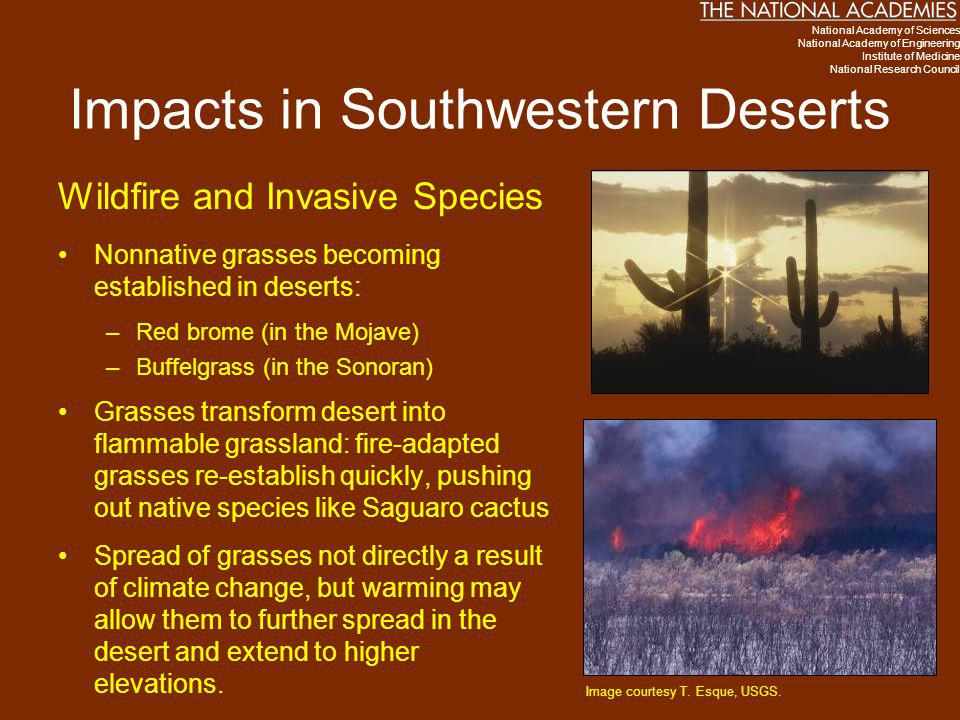 Impacts in Southwestern Deserts