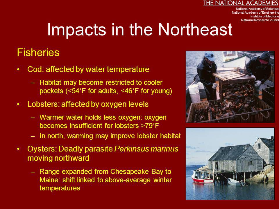 Impacts in the Northeast
