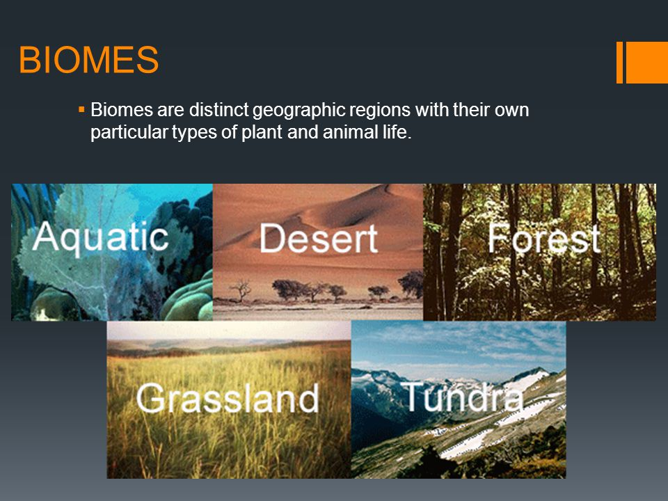 BIOMES Biomes are distinct geographic regions with their own particular types of plant and animal life.