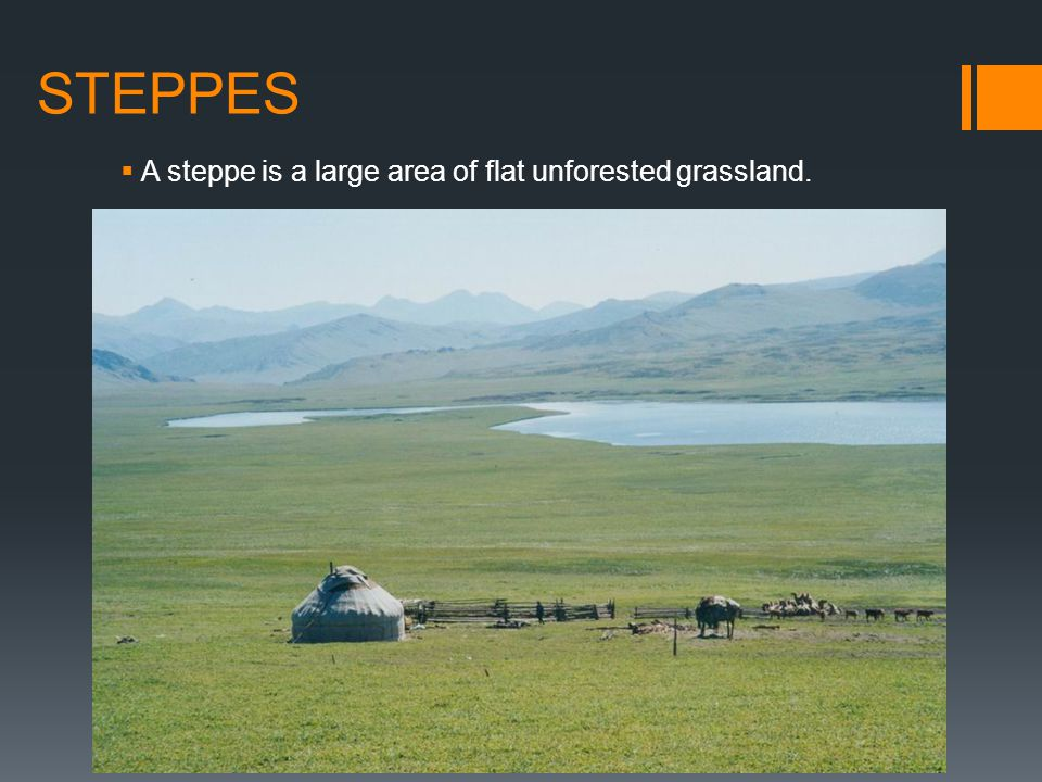 STEPPES A steppe is a large area of flat unforested grassland.