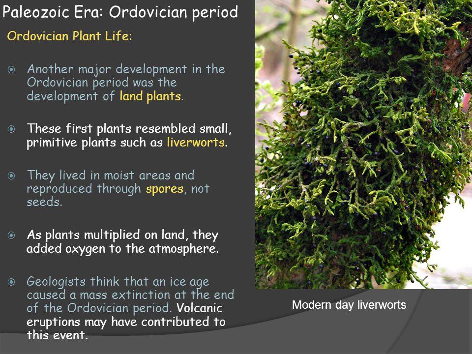 Ordovician plants