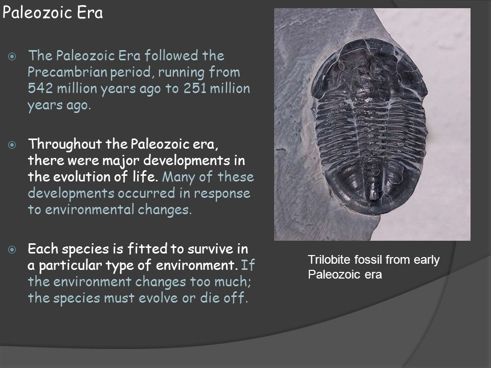 Paleozoic Era The Paleozoic Era followed the Precambrian period, running from 542 million years ago to 251 million years ago.