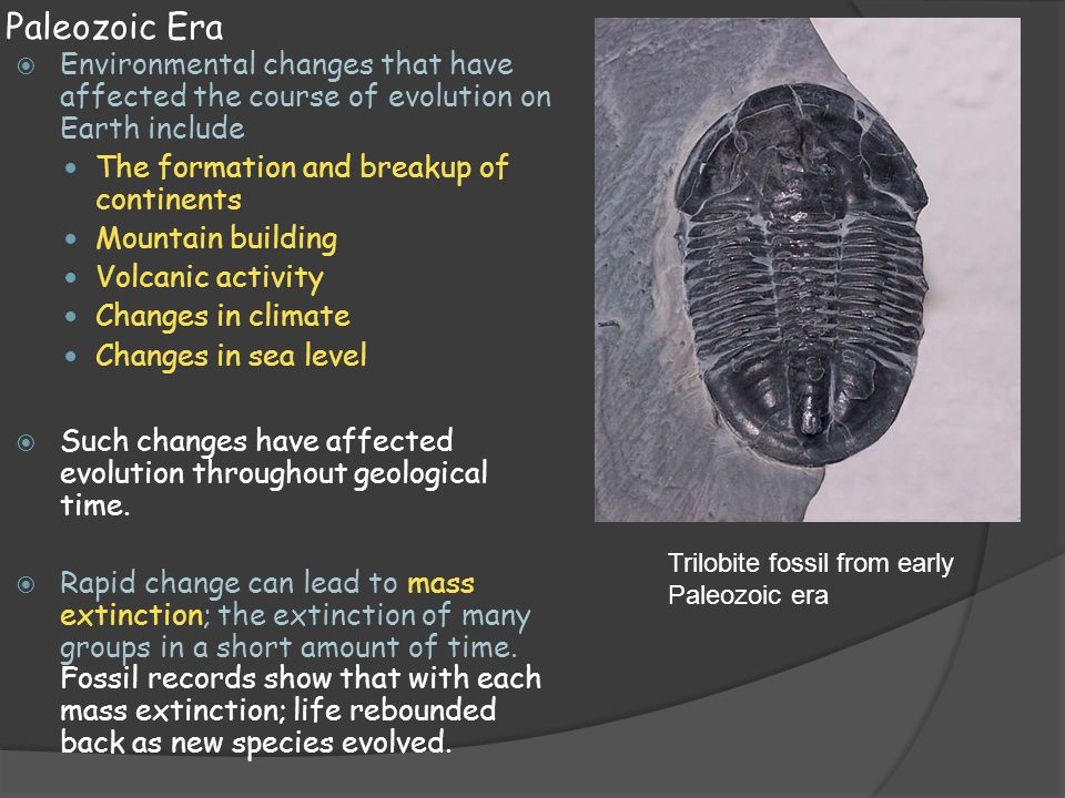 Paleozoic Era Environmental changes that have affected the course of evolution on Earth include. The formation and breakup of continents.