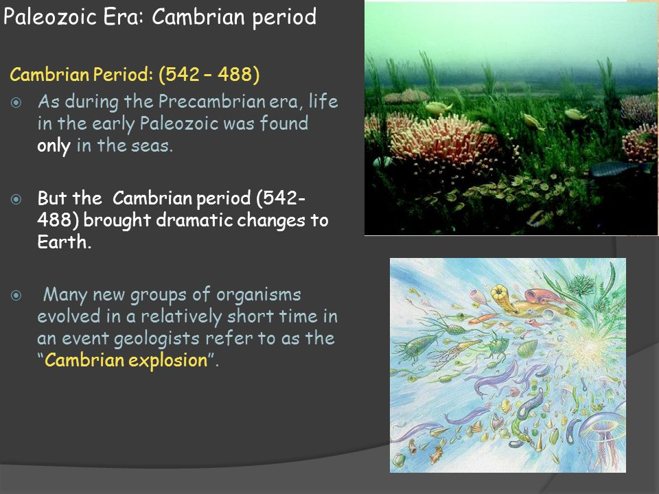 Paleozoic Era: Cambrian period