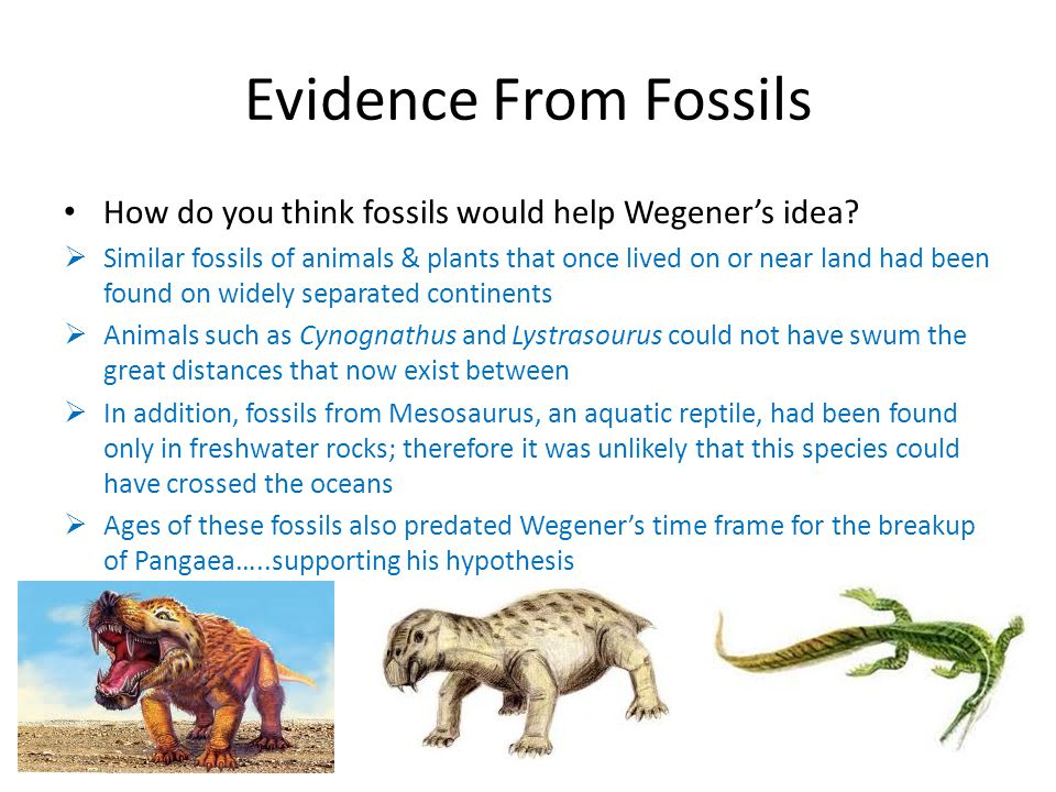 Evidence From Fossils How do you think fossils would help Wegener's idea
