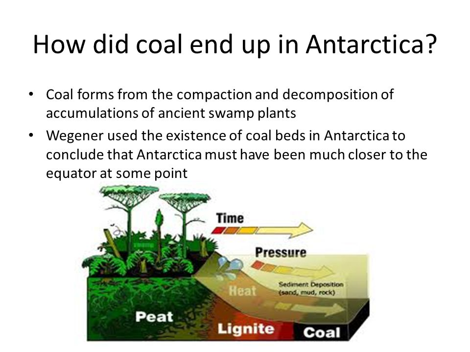 How did coal end up in Antarctica
