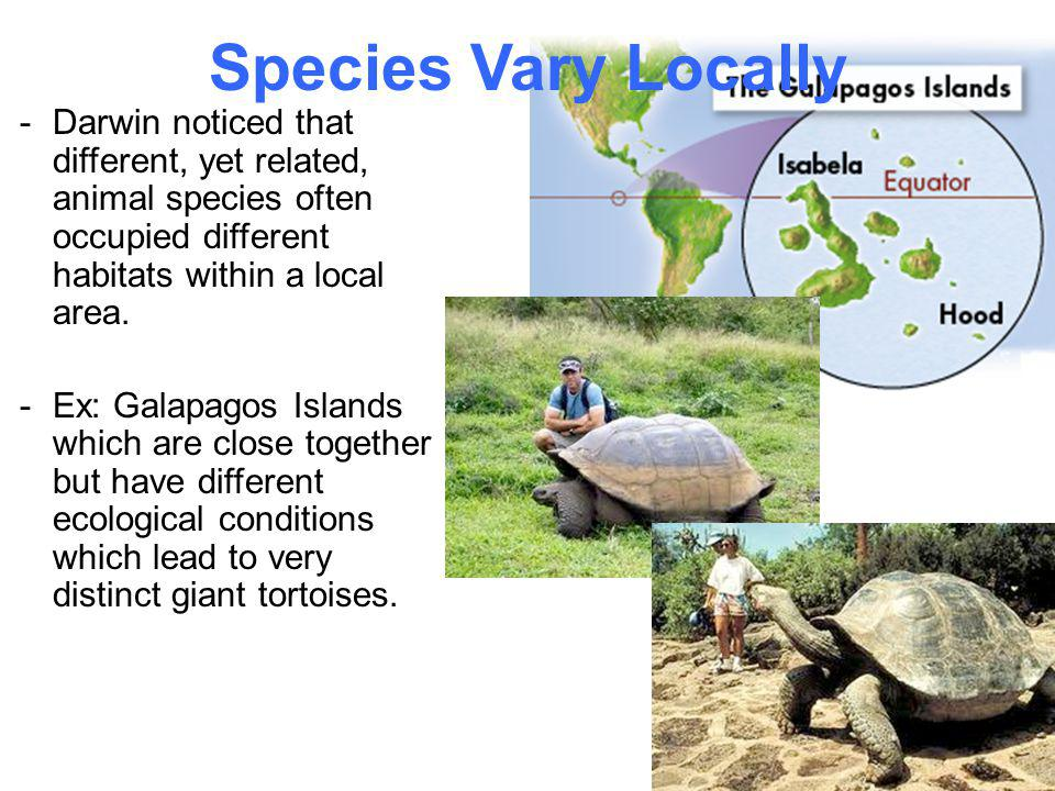 Species Vary Locally Darwin noticed that different, yet related, animal species often occupied different habitats within a local area.