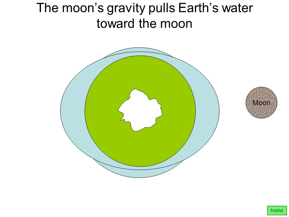 The moon's gravity pulls Earth's water toward the moon