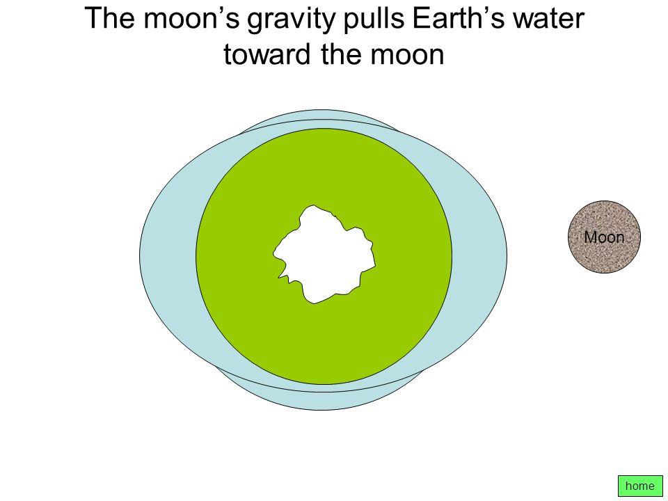 The moon's gravity pulls Earth's water toward the moon