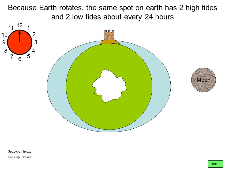 Because Earth rotates, the same spot on earth has 2 high tides and 2 low tides about every 24 hours