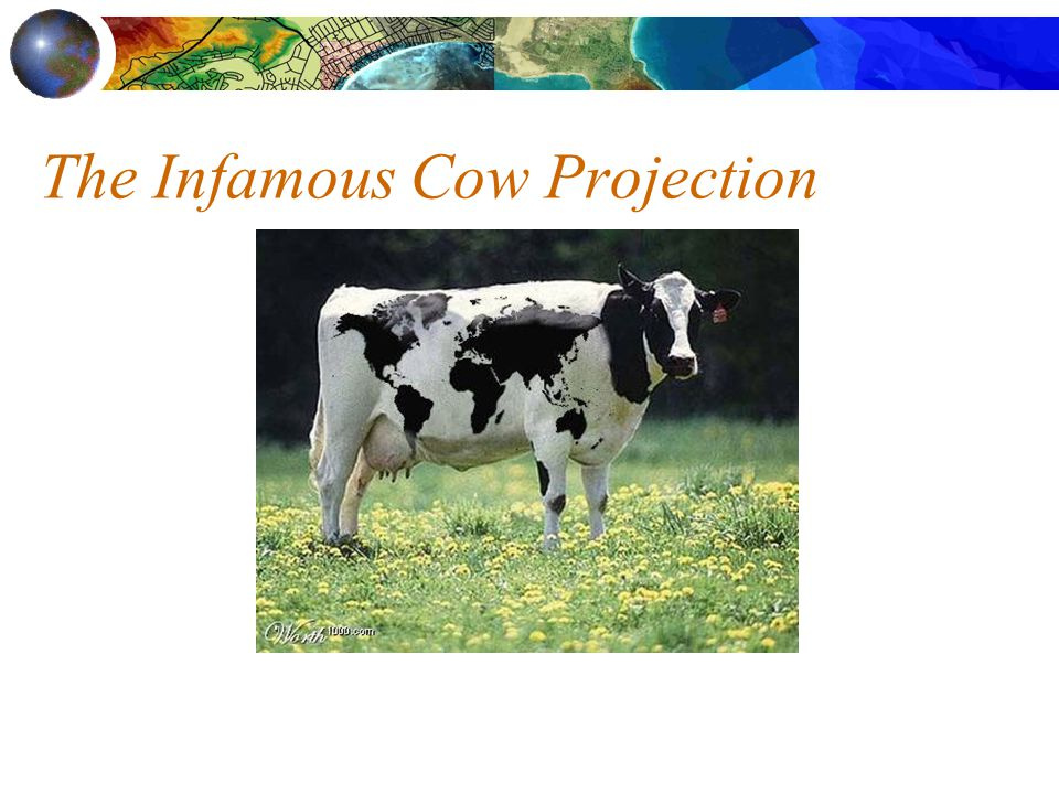 The Infamous Cow Projection