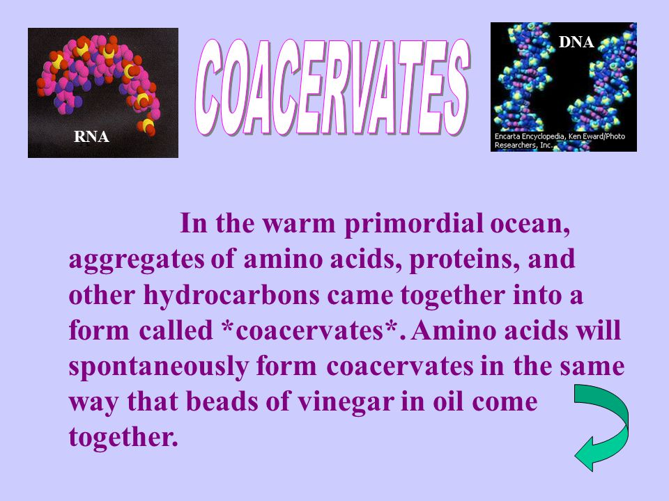 DNA COACERVATES. RNA. A.