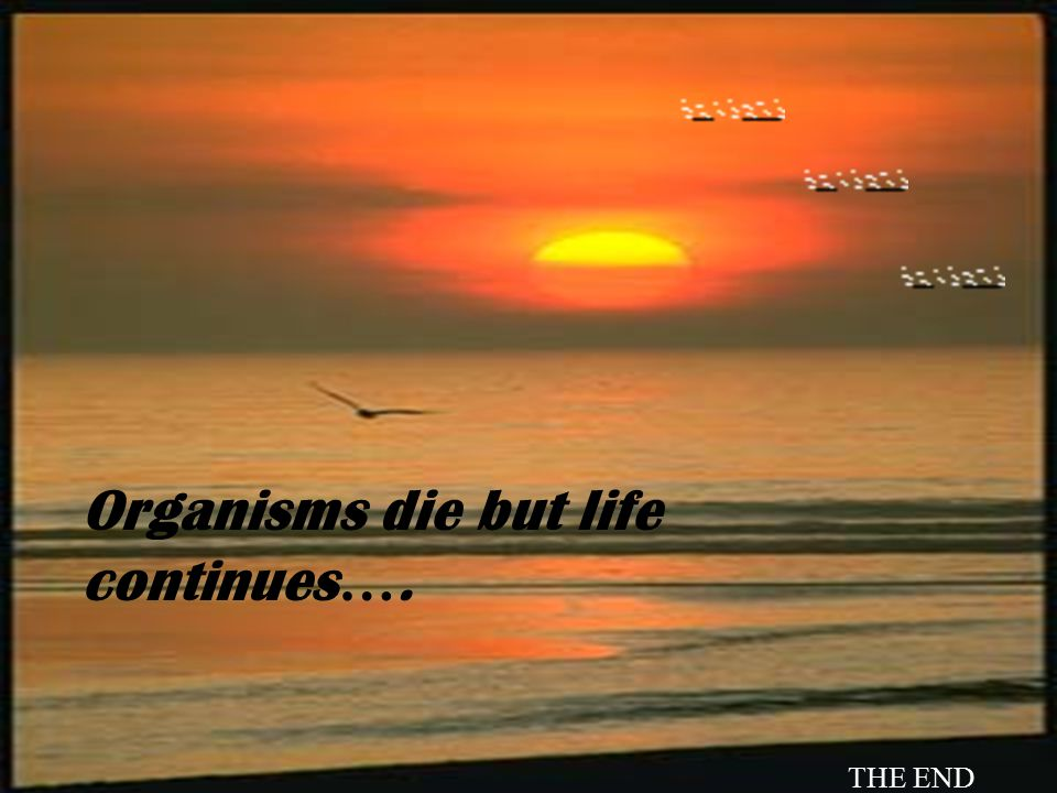 Organisms die but life continues….