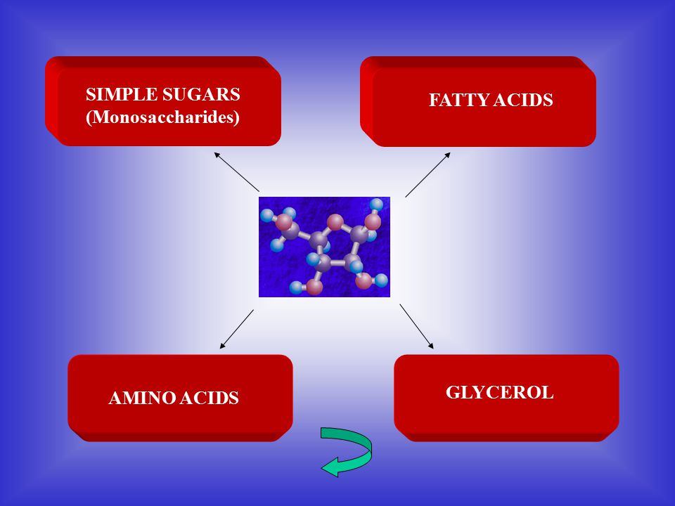 SIMPLE SUGARS (Monosaccharides)