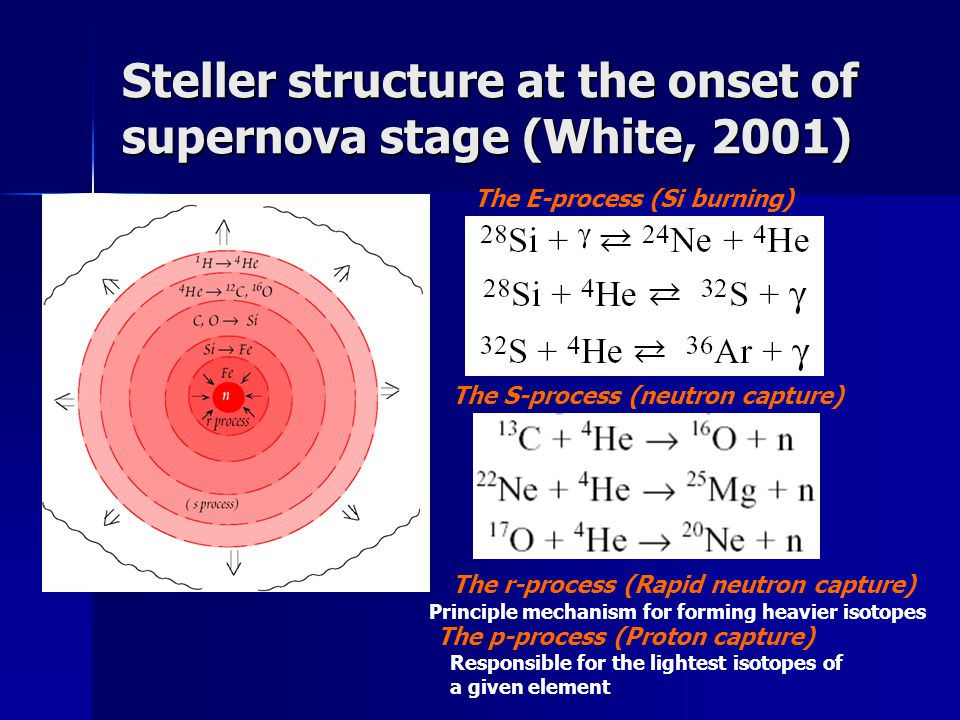Steller structure at the onset of supernova stage (White, 2001)