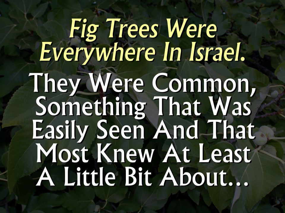 Fig Trees Were Everywhere In Israel.