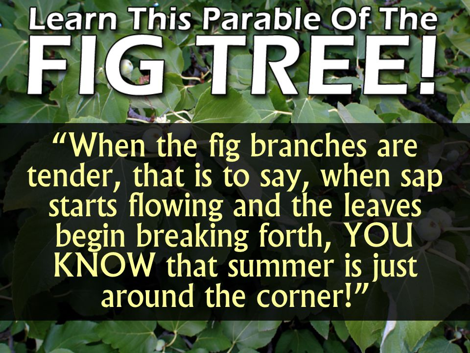When the fig branches are tender, that is to say, when sap starts flowing and the leaves begin breaking forth, YOU KNOW that summer is just around the corner!